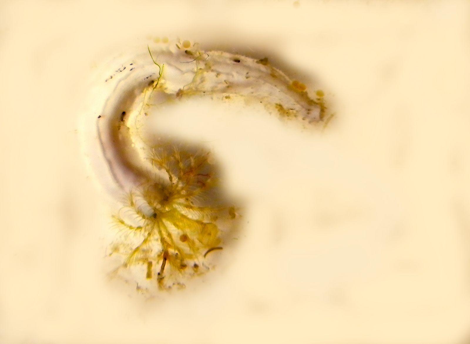 Keel worm on a Virtue disc. Photo: Mikael Olsson